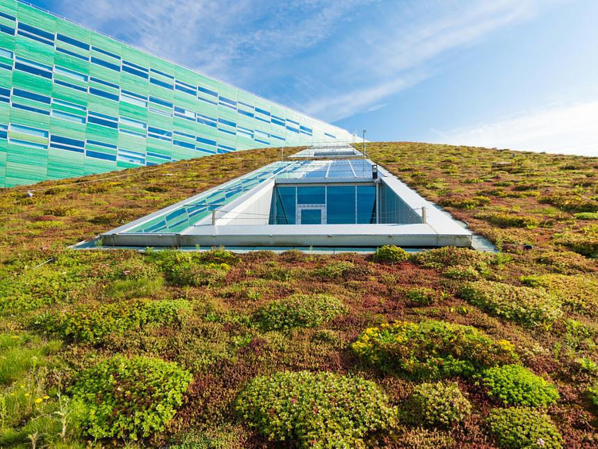 Podpora bude poskytována jak na samostatnou výstavbu zelených střech, tak i na výsadbu funkční vegetace