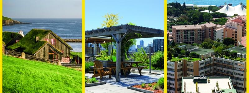Vegetační zelené střechy