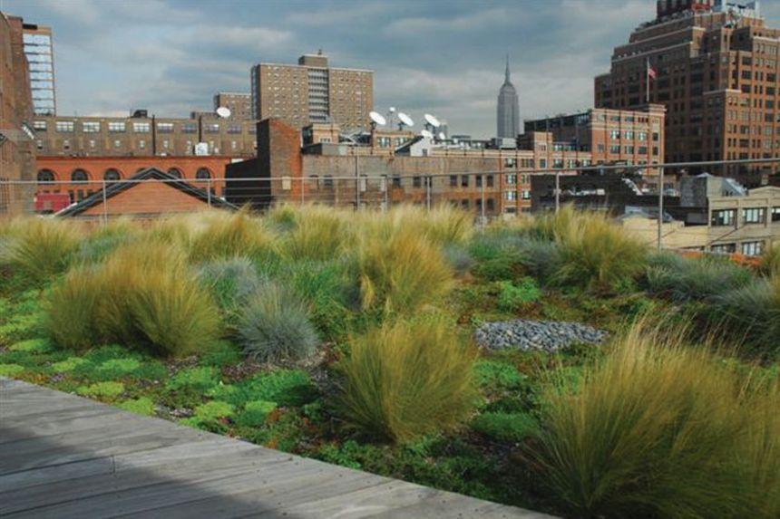 Zelená střecha s rostlinami