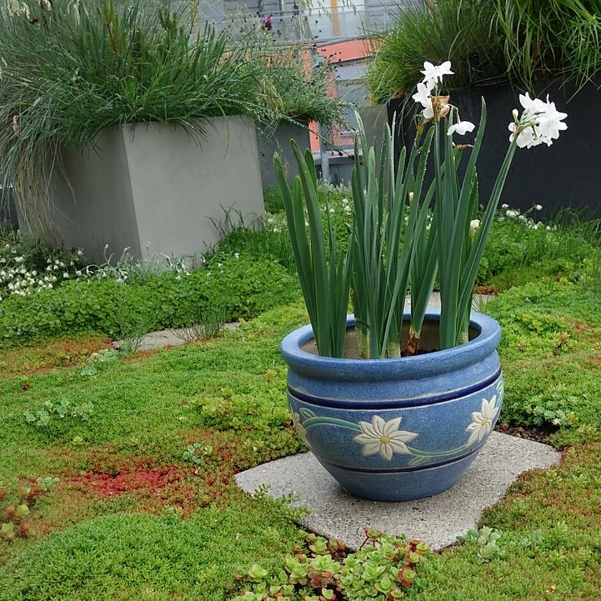 Zelená střecha je vlastně květináč na střeše