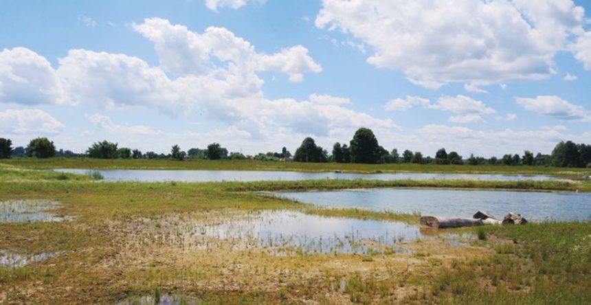 Mokřad u Plavatiska v Žerůvkách nechal zbudovat místní zemědělec. Využil dotaci a na místě vznikl mokřad a šest tůní.