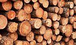 Technické vlastnosti dřeva