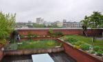 Zelené střechy - naděje pro budoucnost: Druhy a typy zelených střech