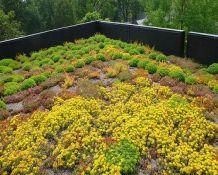 Zelená střecha, ilustrační foto