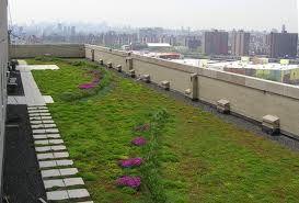 Zelené střechy, ilustrační foto