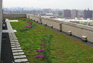 Ilustrační foto, ozeleněná střecha ve městě, zdroj: Google
