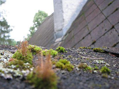 Staré azbestocementové krytiny porostlé mechy a lišejníky, zdroj: Ruukki